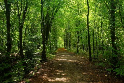 green living, importance of trees, U.P. holistic magazine, U.P. wellness publication