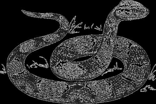 snake-48155_1280