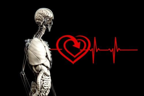 anti-aging, U.P. wellness publication, U.P. holistic health publication, U.P. health magazine, U.P. holistic health magazine, U.P. wellness magazine, holistic health in the U.P., holistic health in MI's Upper Peninsula, wellness publication in MI's Upper Peninsula, tips for seniors