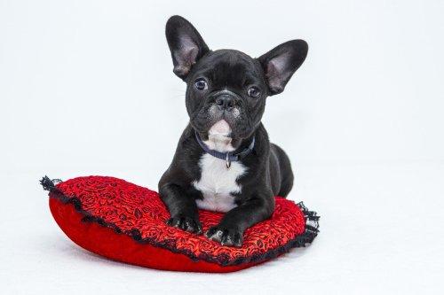 holistic animal care, caring for disabled pet, U.P. holistic wellness publication, U.P. holistic business