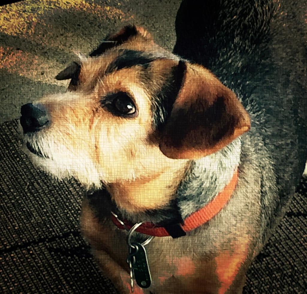 help with rescue animal, holistic animal care, holistic wellness publication